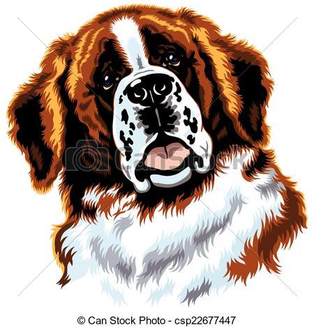 Saint Bernard clipart #11, Download drawings