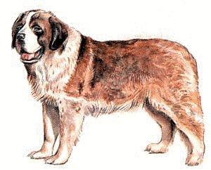 Saint Bernard clipart #16, Download drawings