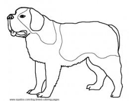 St. Bernard coloring #5, Download drawings