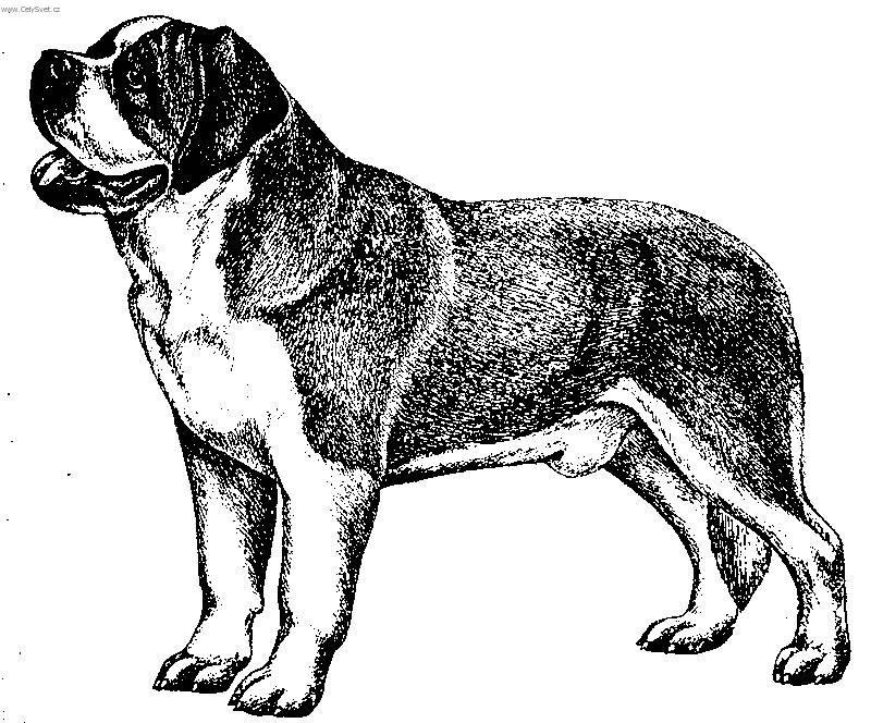 Image Result For Cute Saint Bernard Coloring Pages