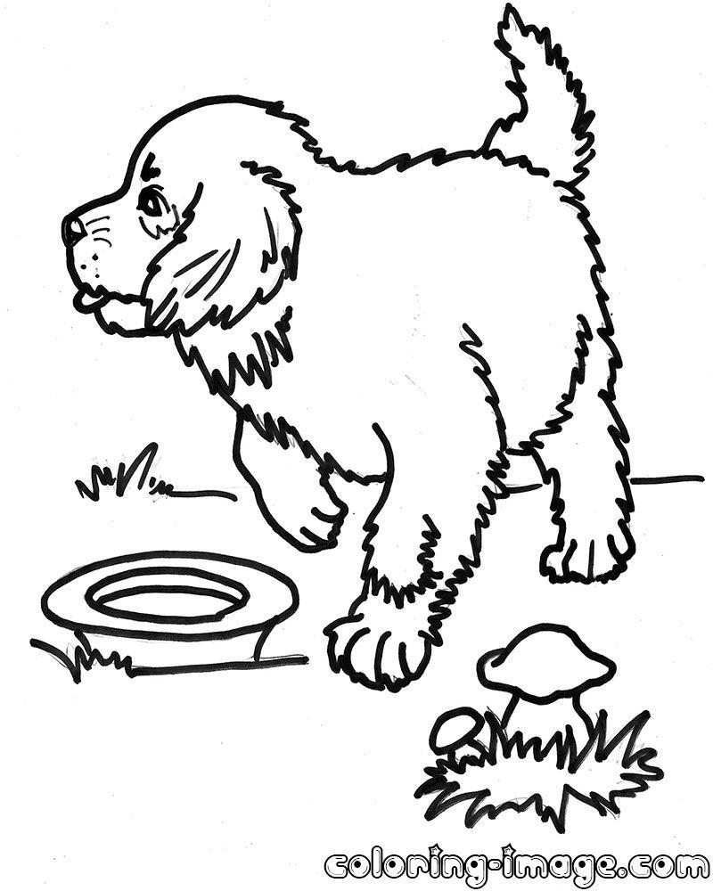 St. Bernard coloring #2, Download drawings