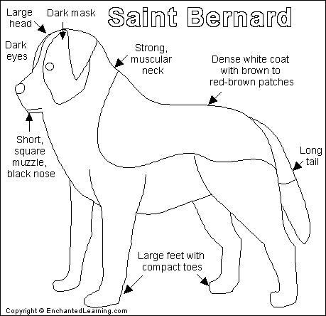St. Bernard coloring #7, Download drawings