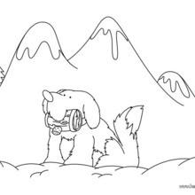 St. Bernard coloring #15, Download drawings