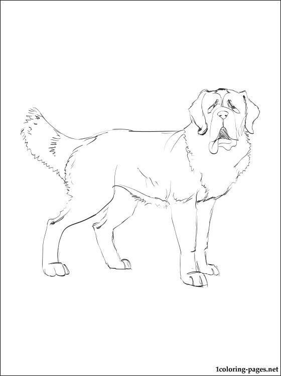 St. Bernard coloring #4, Download drawings
