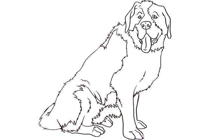 St. Bernard coloring #13, Download drawings