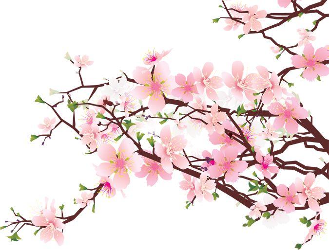 Sakura Blossom clipart #9, Download drawings