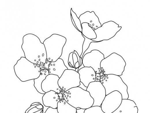 Sakura Blossom coloring #4, Download drawings