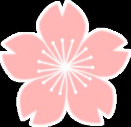 Sakura clipart #11, Download drawings
