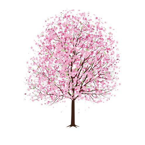 Sakura Tree clipart #9, Download drawings