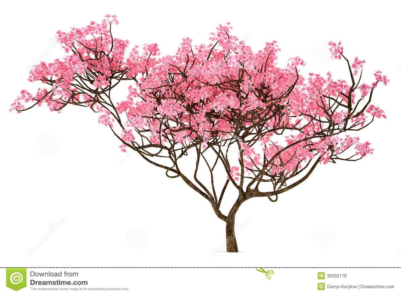 Sakura Tree clipart #20, Download drawings