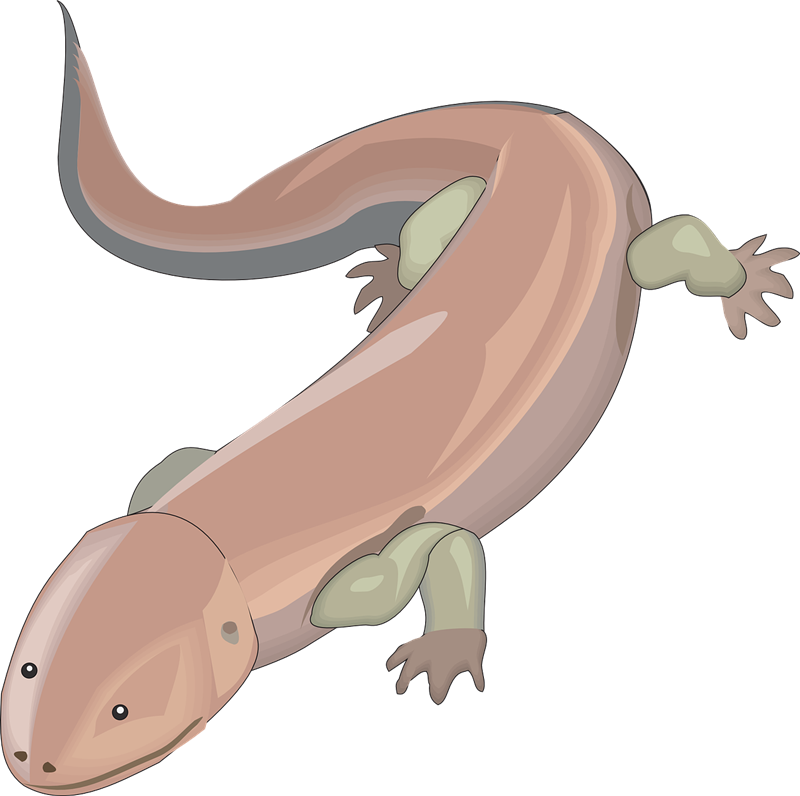 Salamander clipart #12, Download drawings