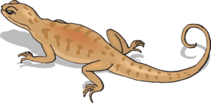 Salamander clipart #4, Download drawings