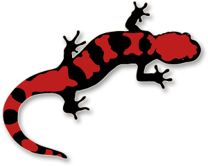 Salamander clipart #20, Download drawings
