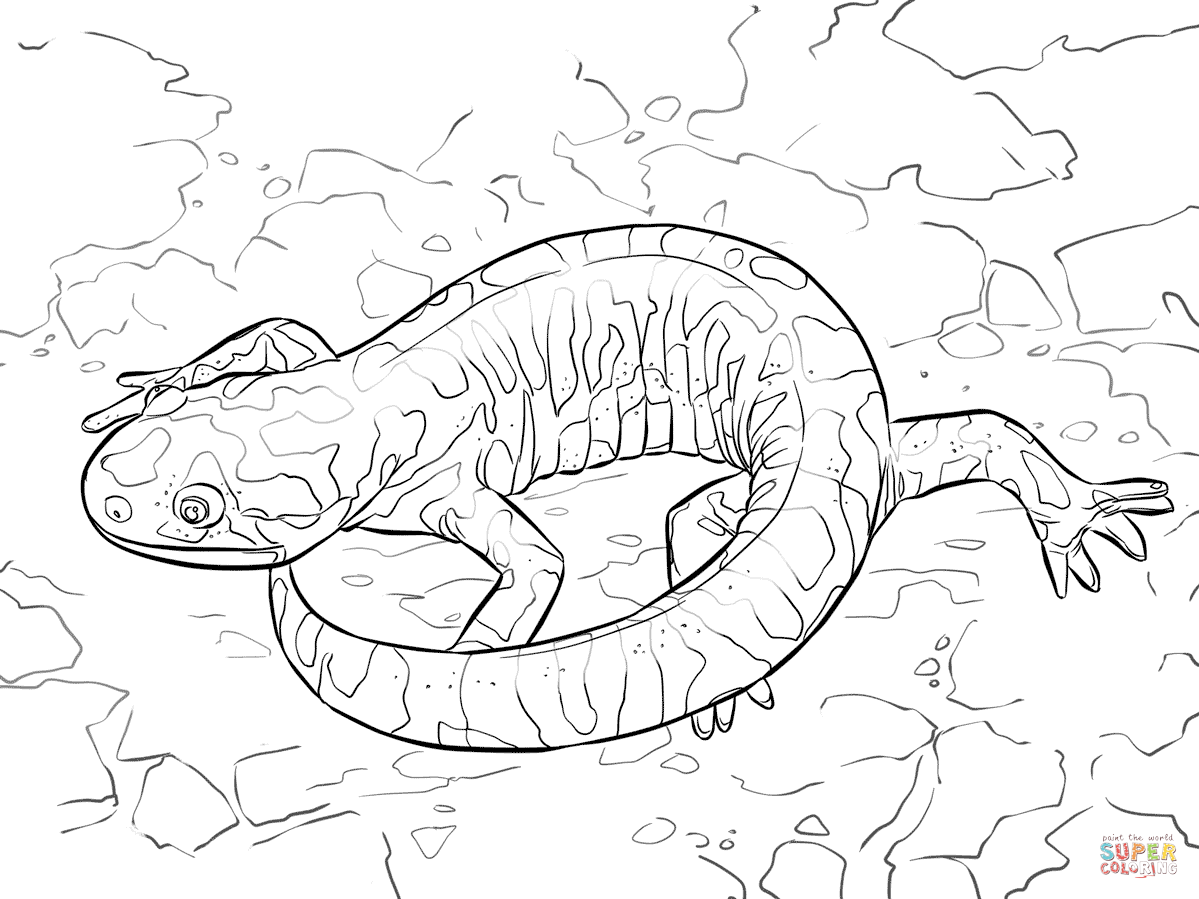 Salamander coloring #14, Download drawings