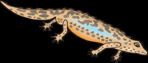 Salamander svg #8, Download drawings