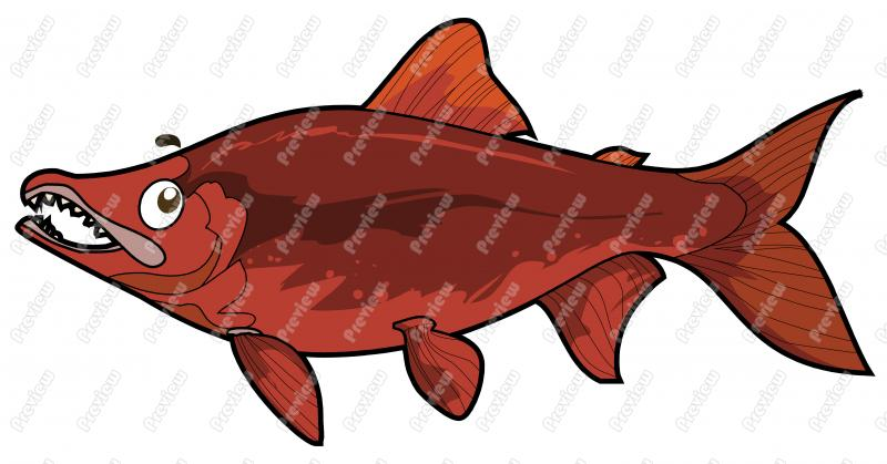 Sockeye Salmon clipart #2, Download drawings