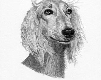 Saluki clipart #11, Download drawings
