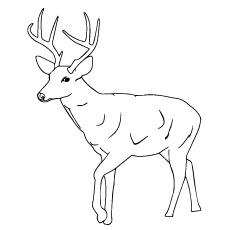 Sambar  coloring #6, Download drawings