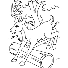 Sambar  coloring #8, Download drawings