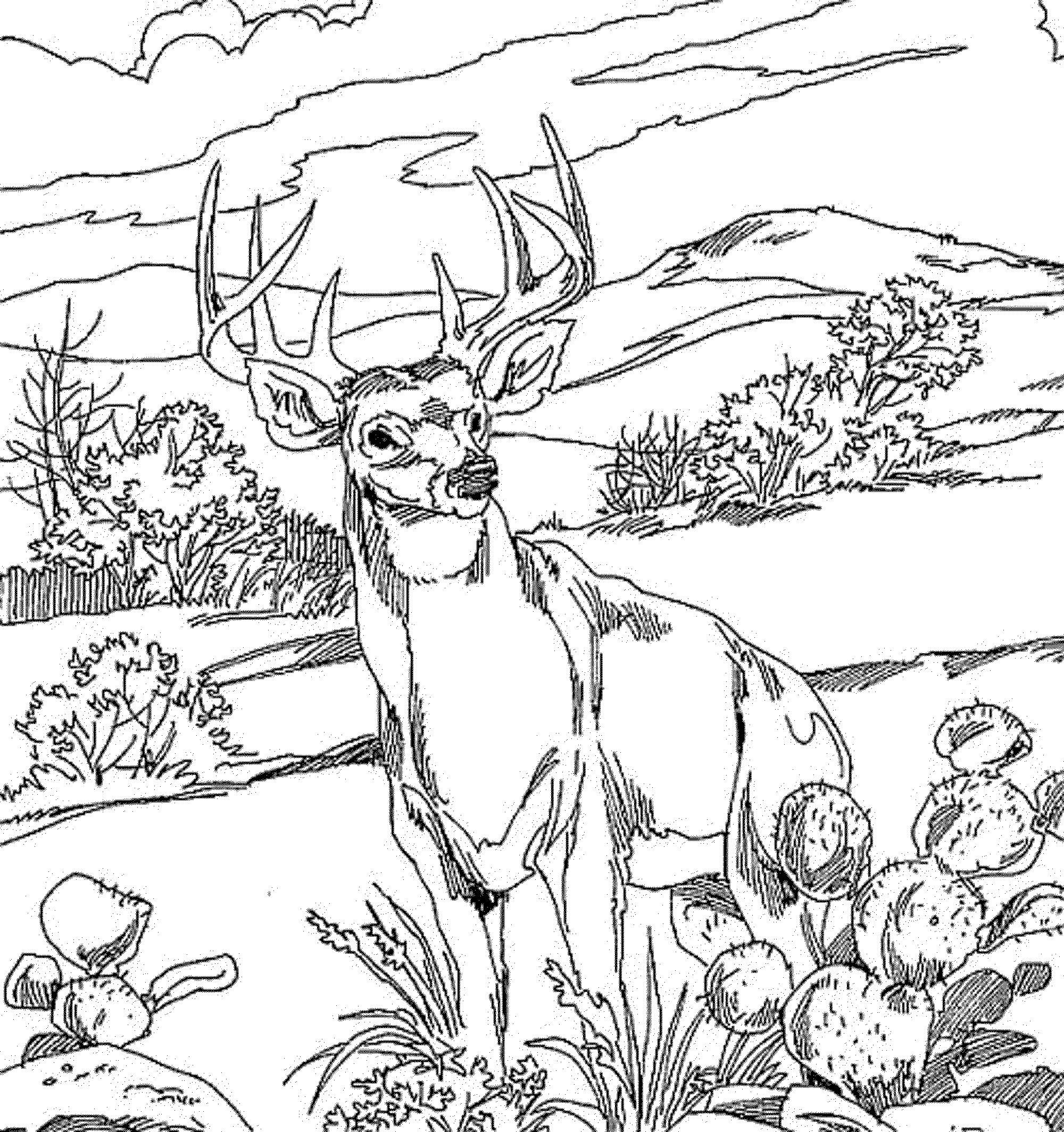 Sambar  coloring #19, Download drawings