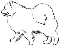 Samoyed clipart #16, Download drawings