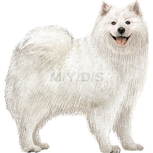 Samoyed clipart #3, Download drawings