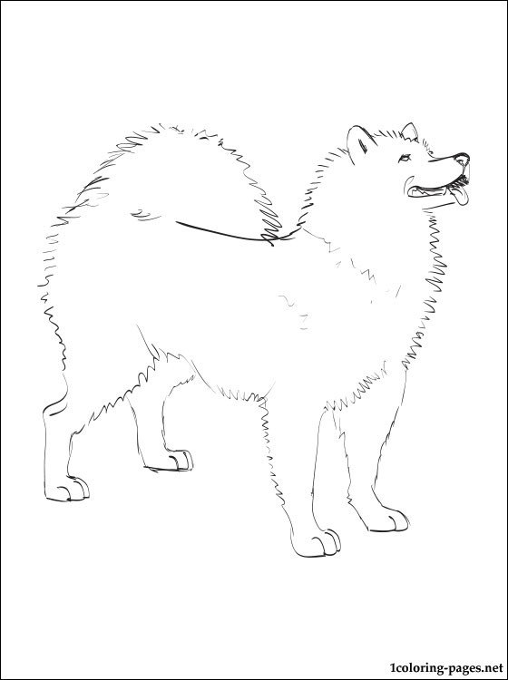 Samoyed coloring #1, Download drawings
