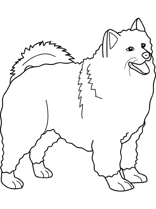 Samoyed coloring #4, Download drawings