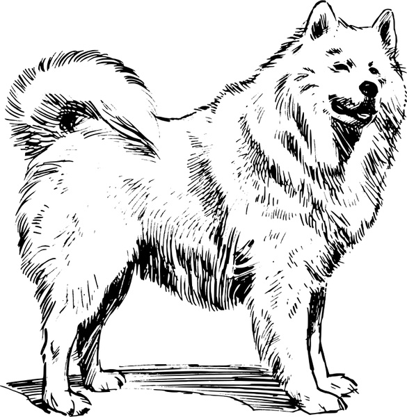 Samoyed svg #19, Download drawings