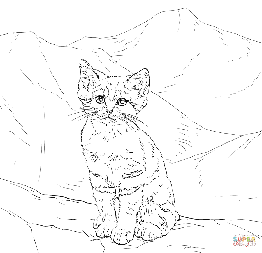 Sand Cat clipart #4, Download drawings