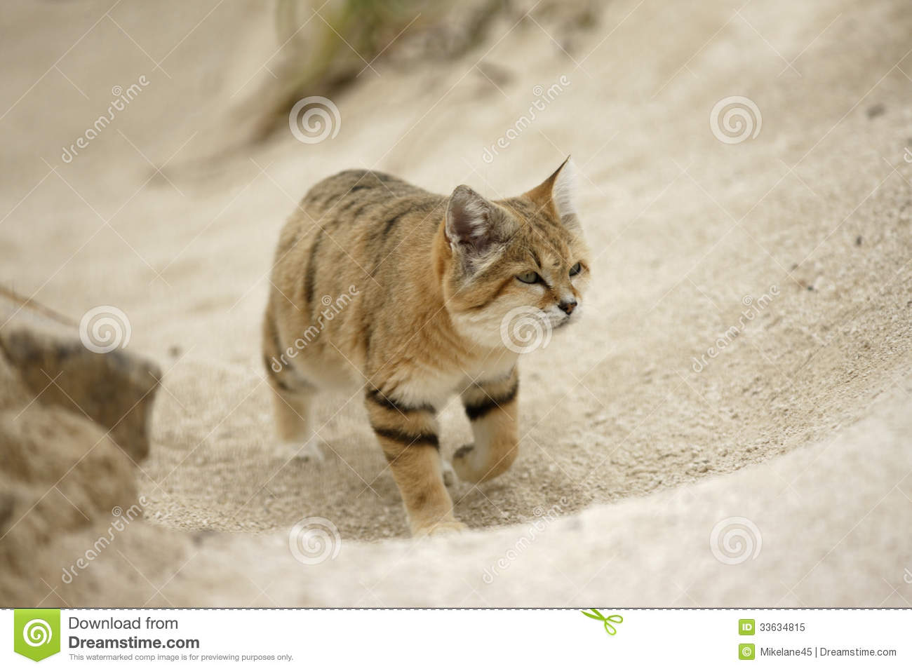 Sand Cat clipart #5, Download drawings