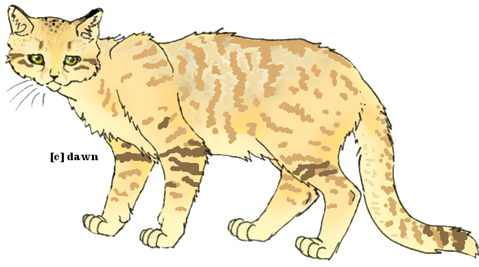 Sand Cat clipart #17, Download drawings