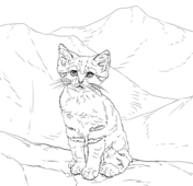 Sand Cat clipart #10, Download drawings