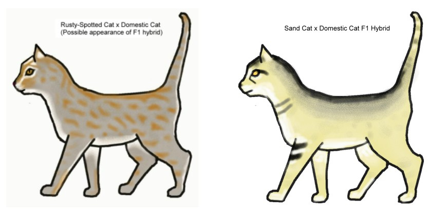 Sand Cat clipart #15, Download drawings