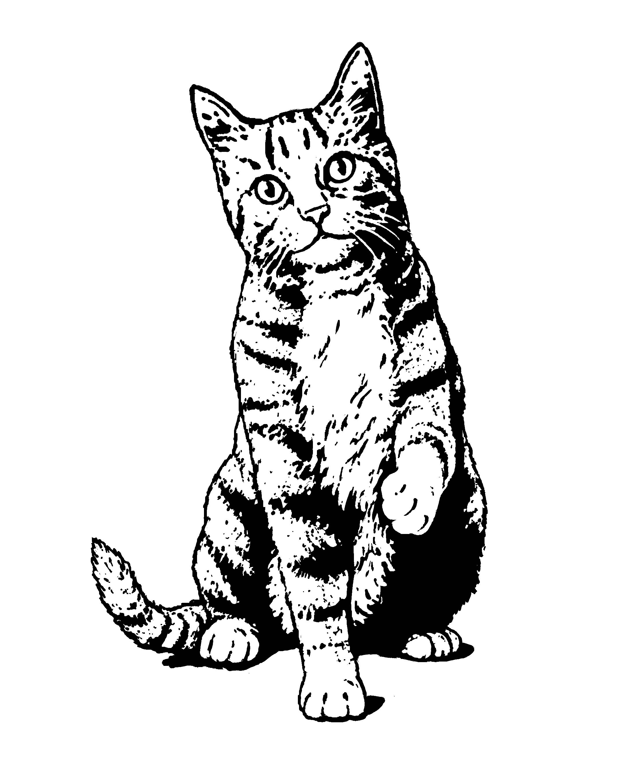 Sand Cat clipart #14, Download drawings