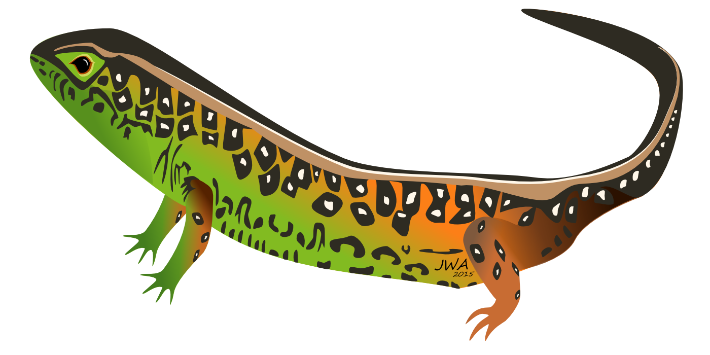 Sand Lizard clipart #20, Download drawings