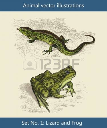 Sand Lizard clipart #8, Download drawings