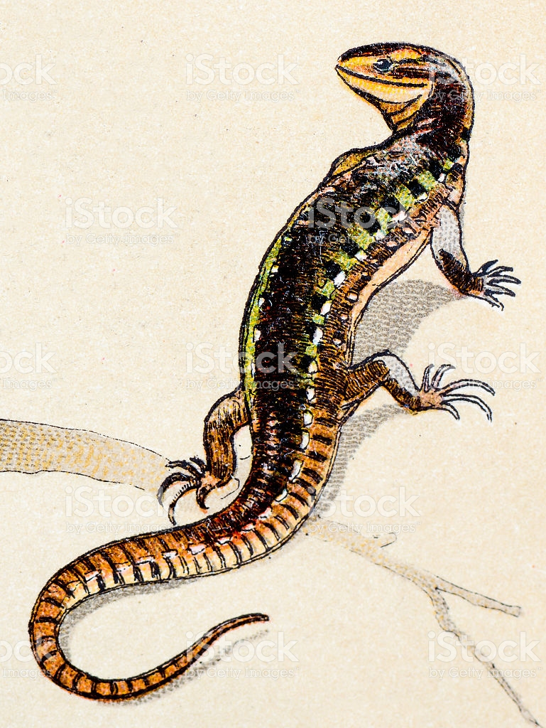 Sand Lizard clipart #19, Download drawings