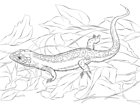 Sand Lizard coloring #5, Download drawings