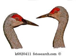 Sandhill Crane clipart #13, Download drawings