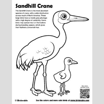 sandhill crane coloring  download sandhill crane coloring