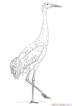 Sandhill Crane svg #11, Download drawings