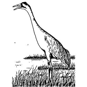 Sandhill Crane svg #10, Download drawings