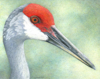 Sandhill Crane svg #9, Download drawings