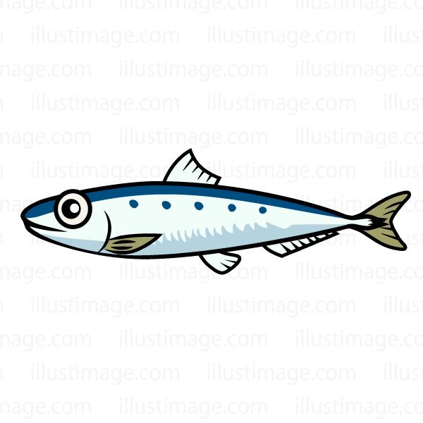 Sardine clipart #19, Download drawings