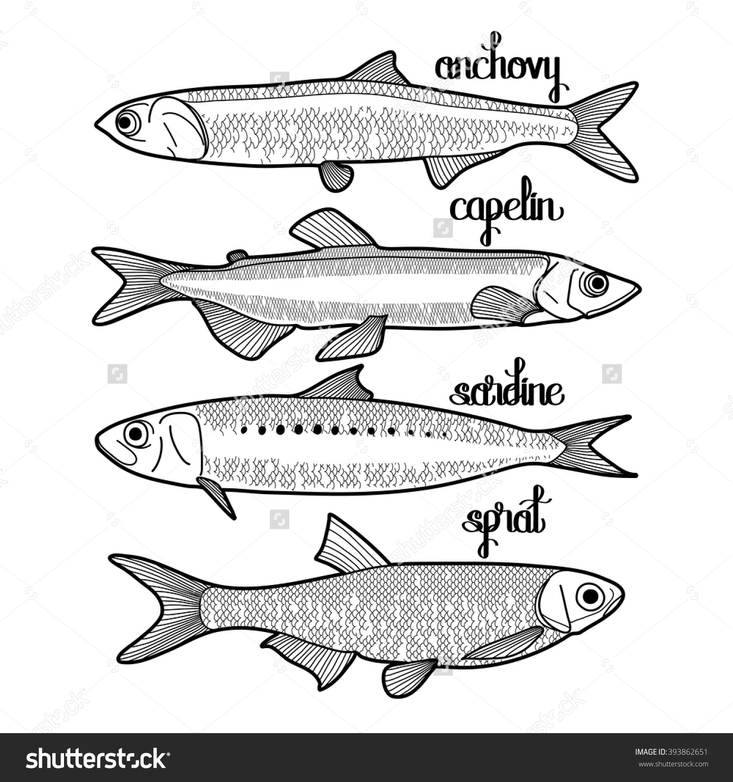 Sardine coloring #12, Download drawings