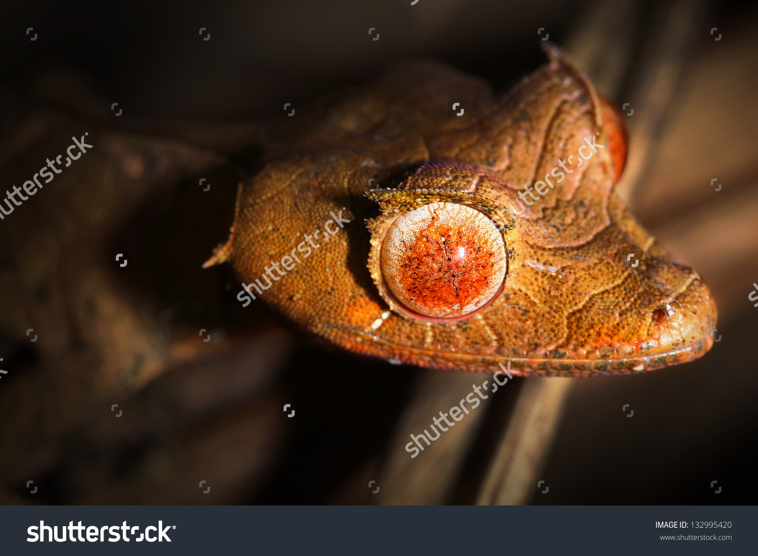 Satanic Leaf-tailed Gecko clipart #19, Download drawings