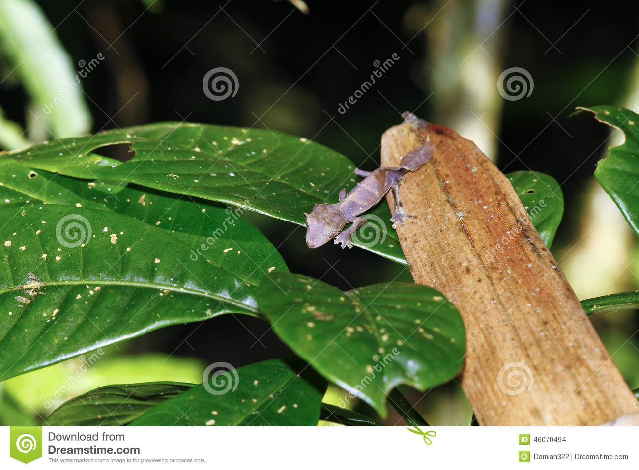 Satanic Leaf-tailed Gecko clipart #4, Download drawings