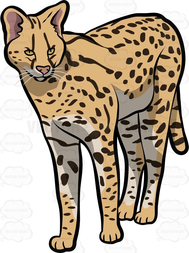 Savannah Cat clipart #6, Download drawings