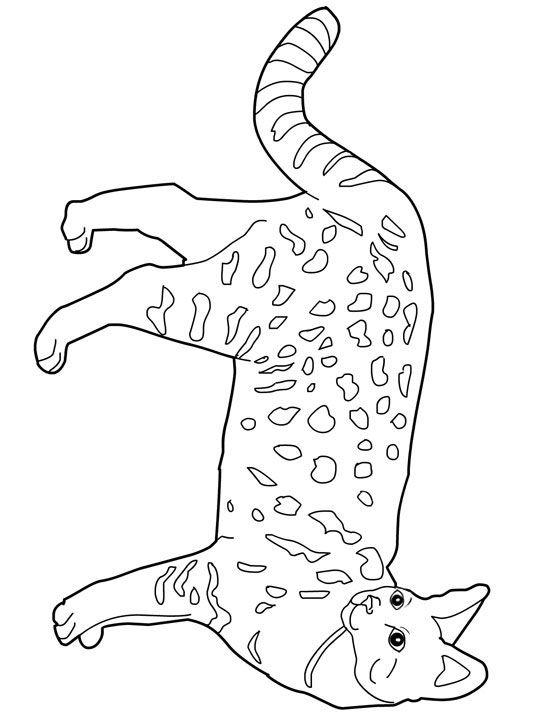Savannah Cat clipart #14, Download drawings